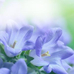 In Memory Purple Flowers